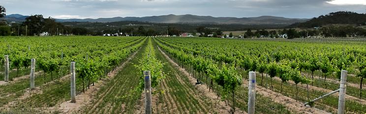 stanthorpe  u0026 39 weekend wineries u0026 39  fly